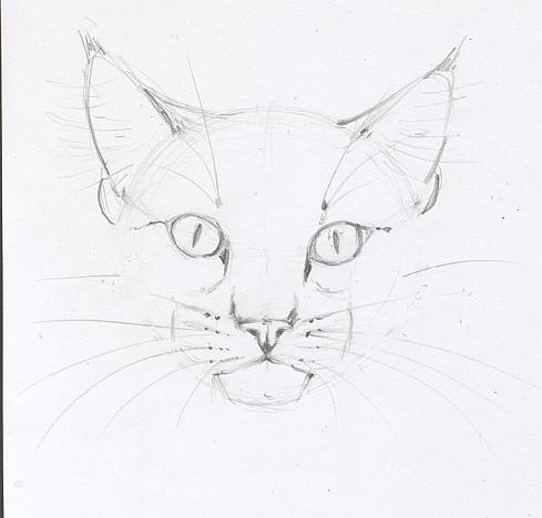 кошки в карандаше Ddndd10