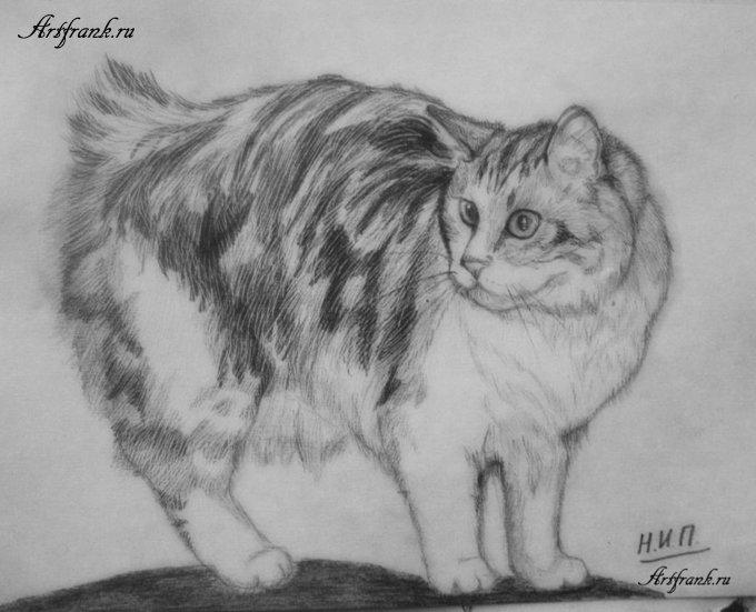 кошки в карандаше Ddu0d10
