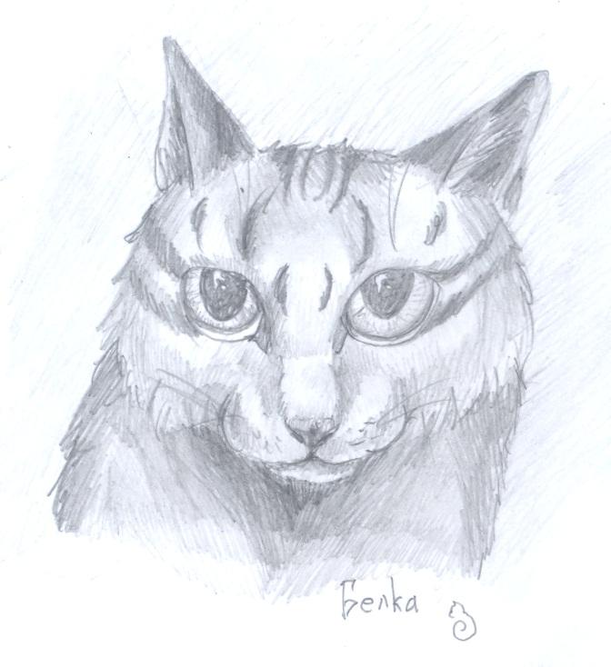 кошки в карандаше Dduddd11