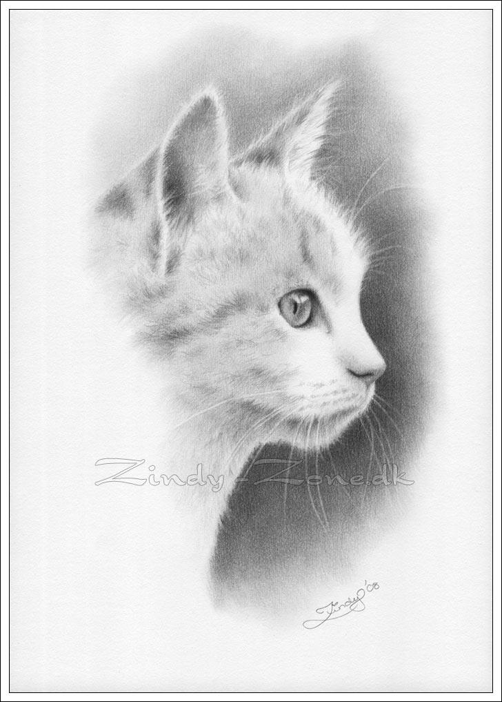 кошки в карандаше Dduddd12