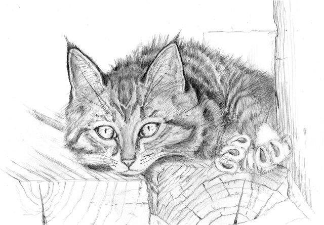 кошки в карандаше Ddun10