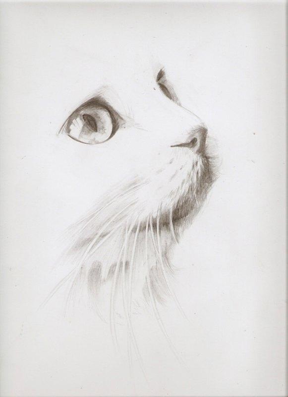 кошки в карандаше Dndnnd10