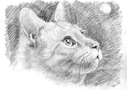 кошки в карандаше Nddnnd10