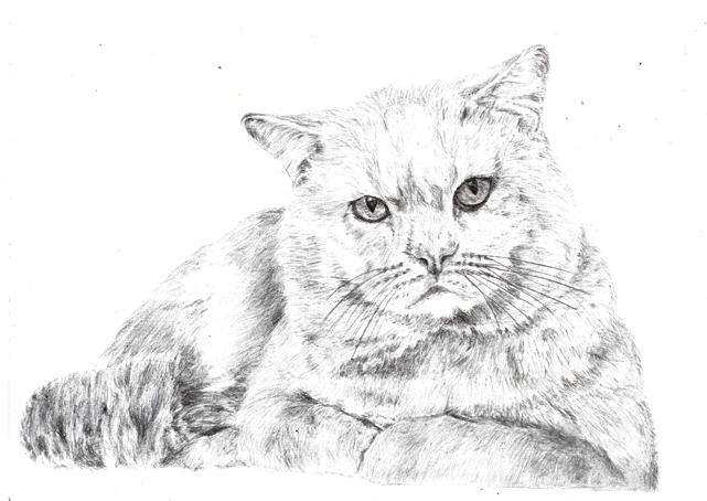 кошки в карандаше Ndundd12