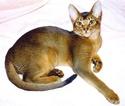 породы кошек Dd10