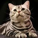 породы кошек Ddndn10