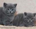 породы кошек Ddndnd11