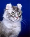 породы кошек Ddund12