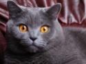 породы кошек Dndndd10