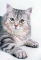 породы кошек Ndd11