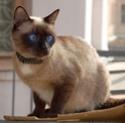 породы кошек Ndd13