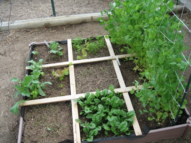 Western Mountains and High Plains: MAY 2013, What's Up in your garden? Img_1411