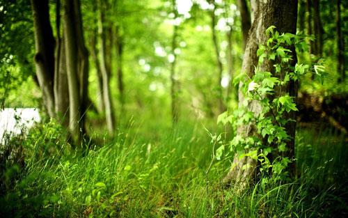 L'Énergie des arbres - Page 3 Green-10