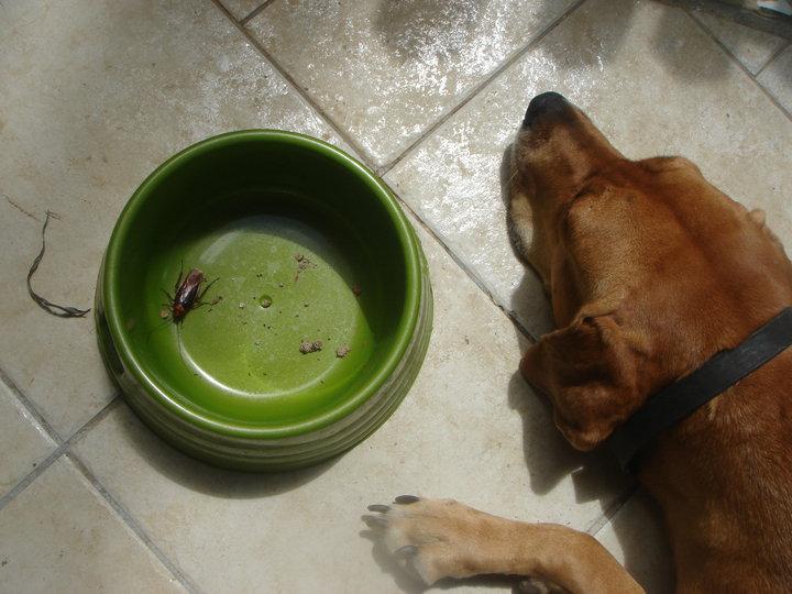 photos de vos chiens et de leurs copains de tous genres  Cafard10