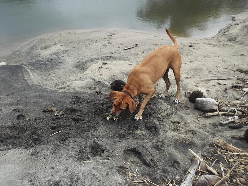 Photo de vos chiens à la plage! - Page 2 Crabe10
