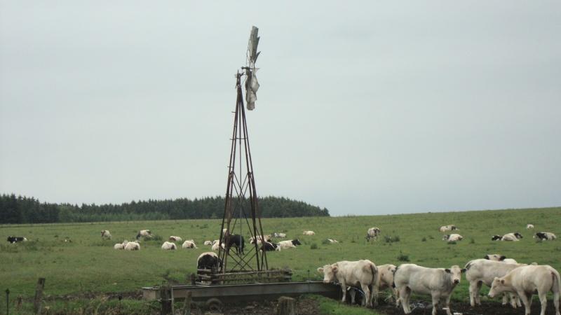 les Ardennes Belges 10810