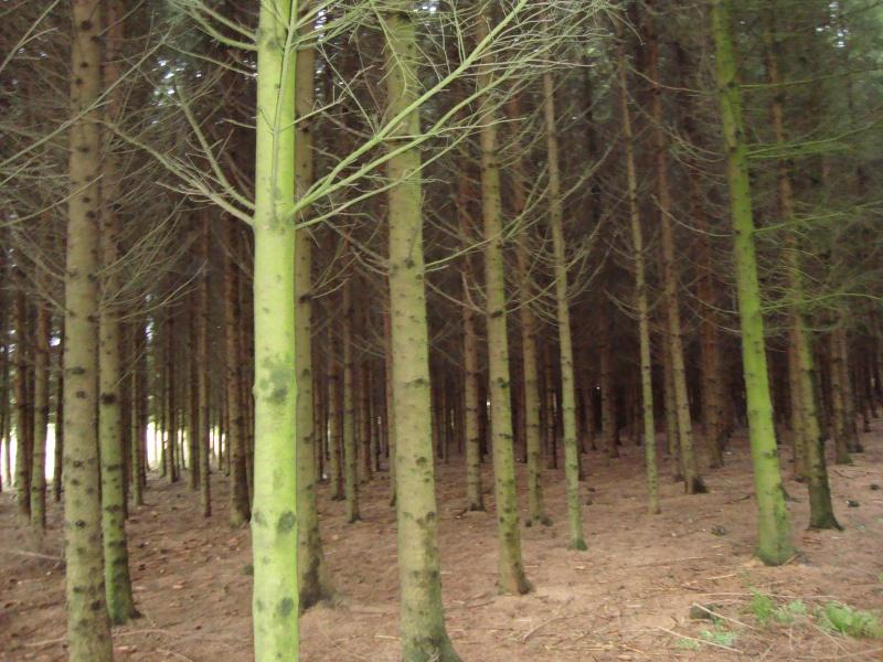 les Ardennes Belges Dsc00810