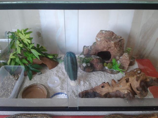 Mon gecko ne mange plus depuis 2 semaines 2013-010