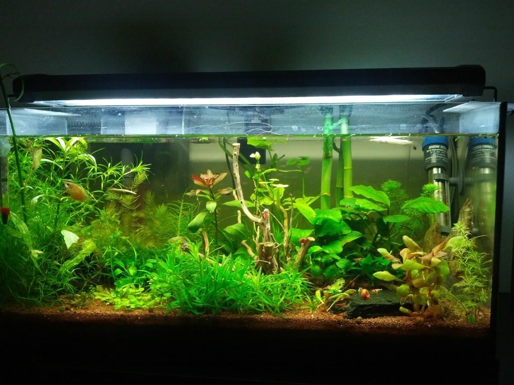 Mes aquariums et mon chat 2013-014