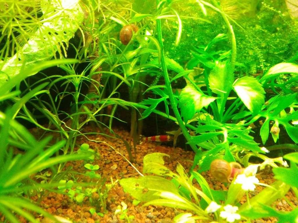 Mes aquariums et mon chat 2013-015