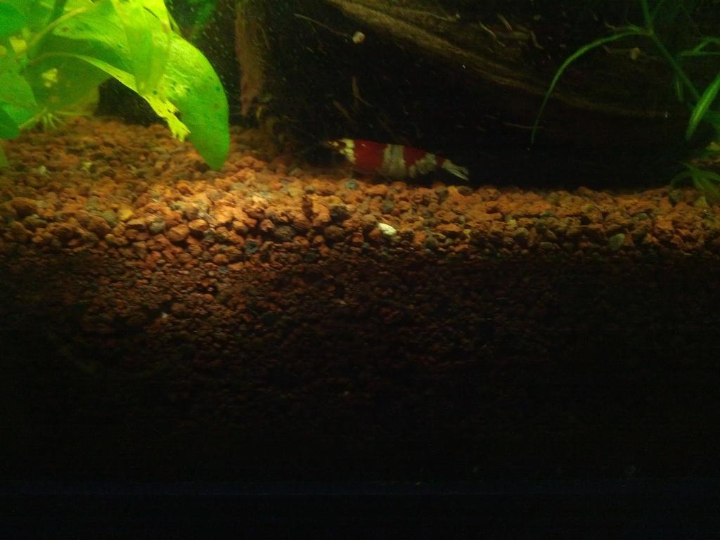 Mes aquariums et mon chat 2013-016
