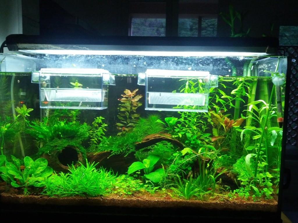 Mes aquariums et mon chat 2013-017