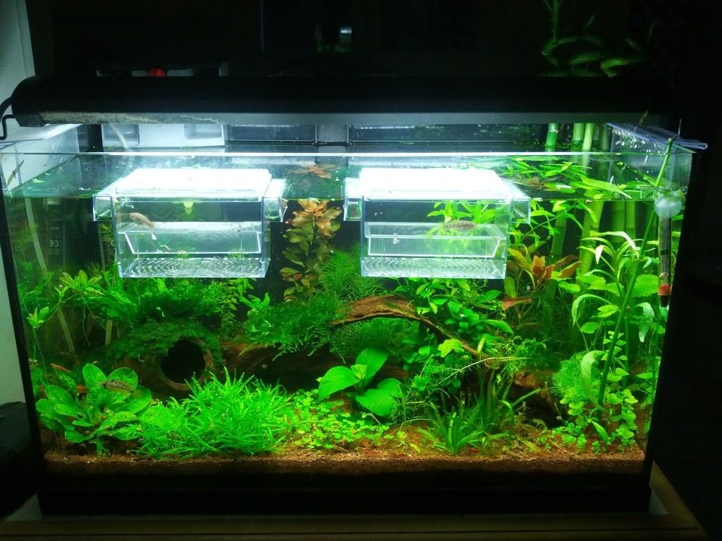 Mes aquariums et mon chat 2013-018