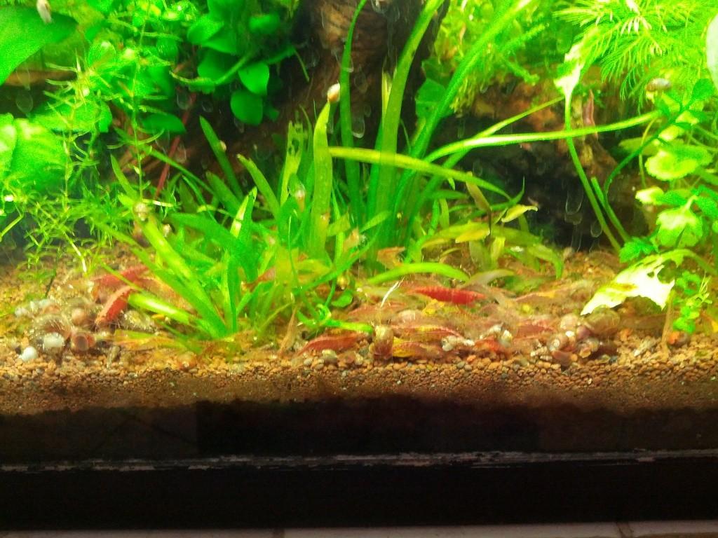 Mes aquariums et mon chat 2013-019