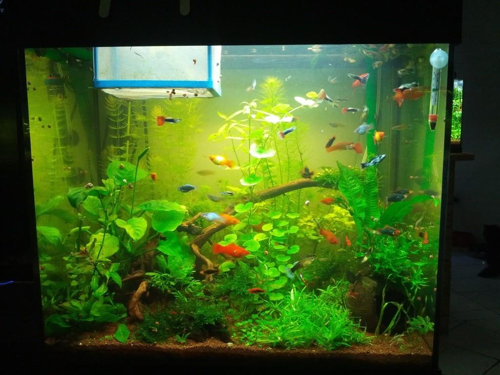 Mes aquariums et mon chat 2013-020