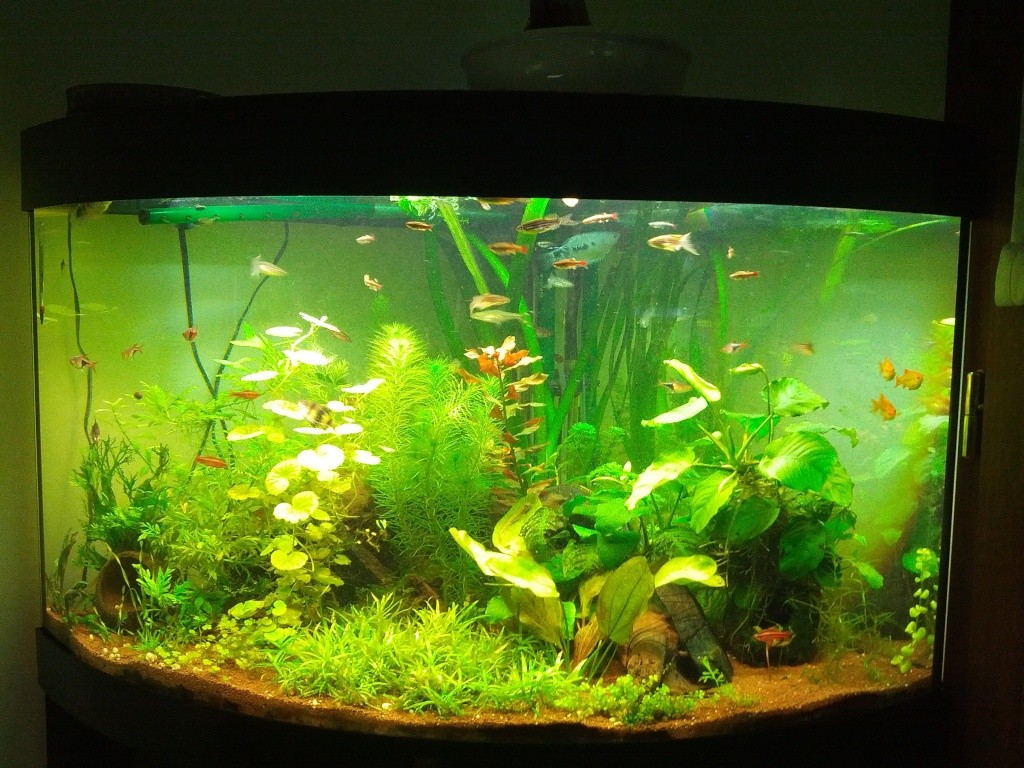 Mes aquariums et mon chat 2013-021