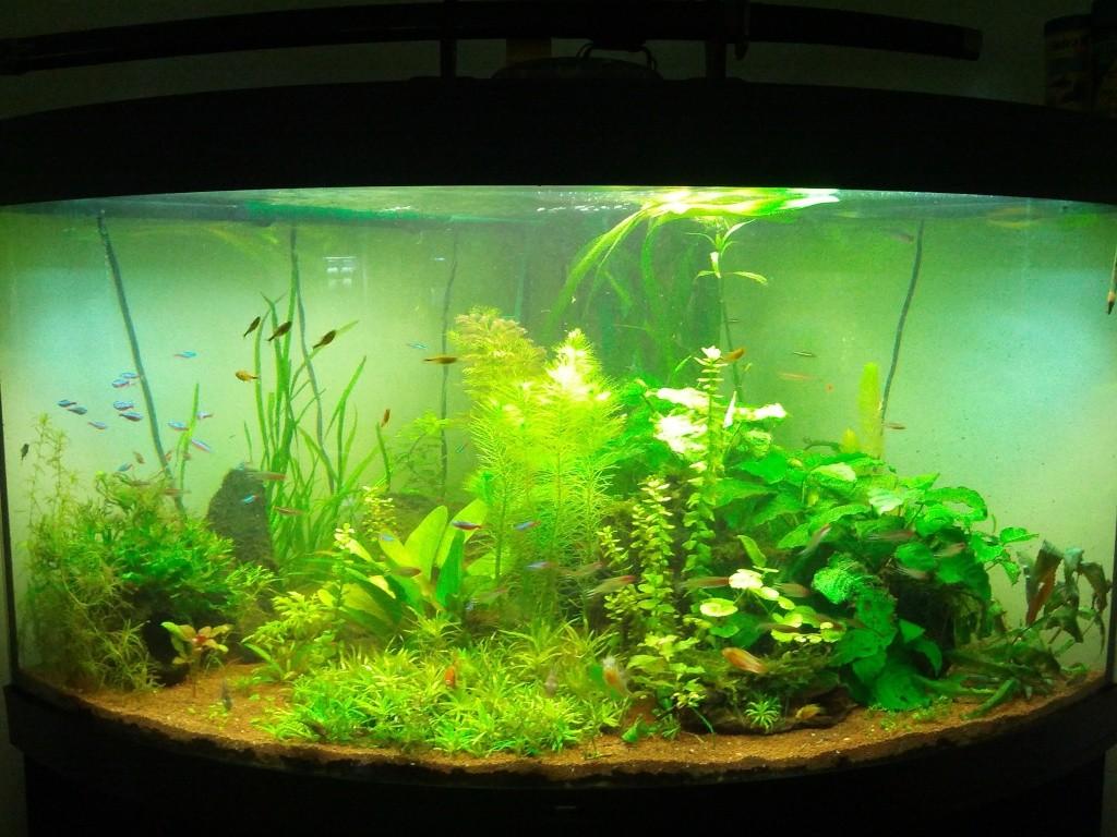 Mes aquariums et mon chat 2013-022