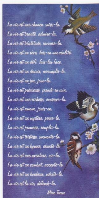 Michel blogue les 450 citations/Bienheureuse Mère Teresa de Calcutta/Navigation Libre/ Photo_13