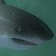[Farming]Créatures et Composants Requin10