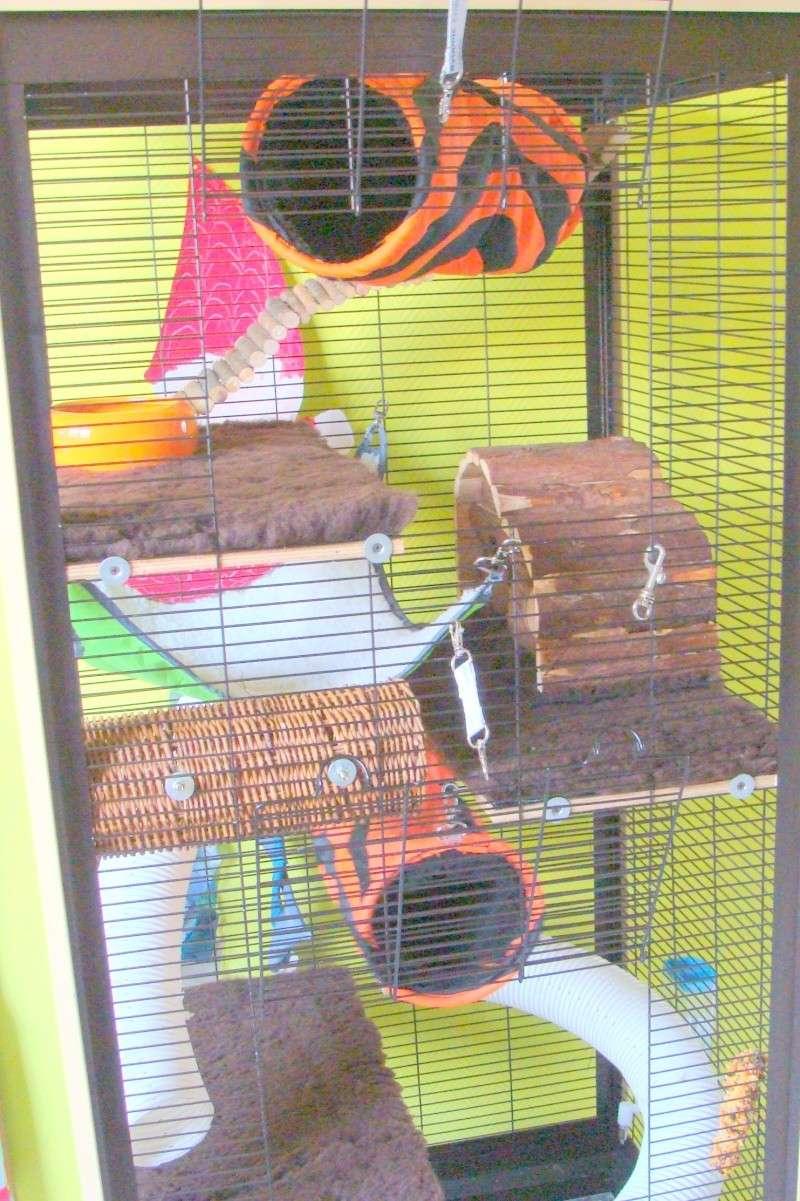 notre cage Dsc00714