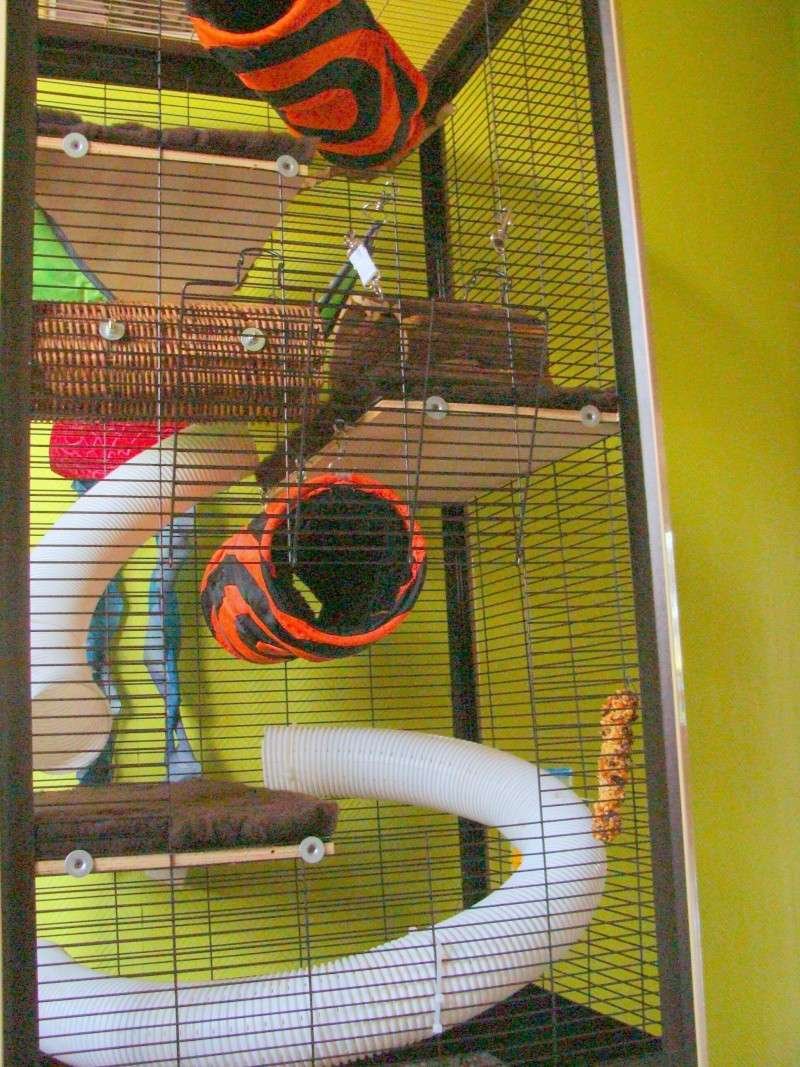 notre cage Dsc00715
