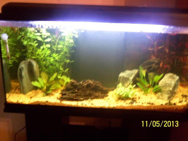 mon 1er aquarium 100_1212