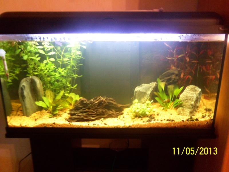 mon 1er aquarium 100_1213