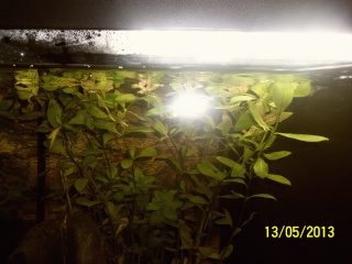 mon 1er aquarium 100_1221