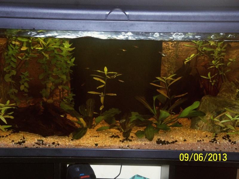 mon 1er aquarium 100_1316