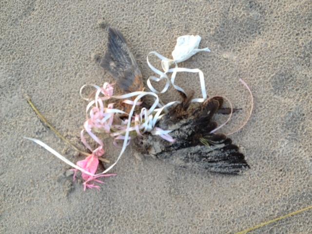 Balloons Blow - ESPECIALLY MYLAR! Bird10