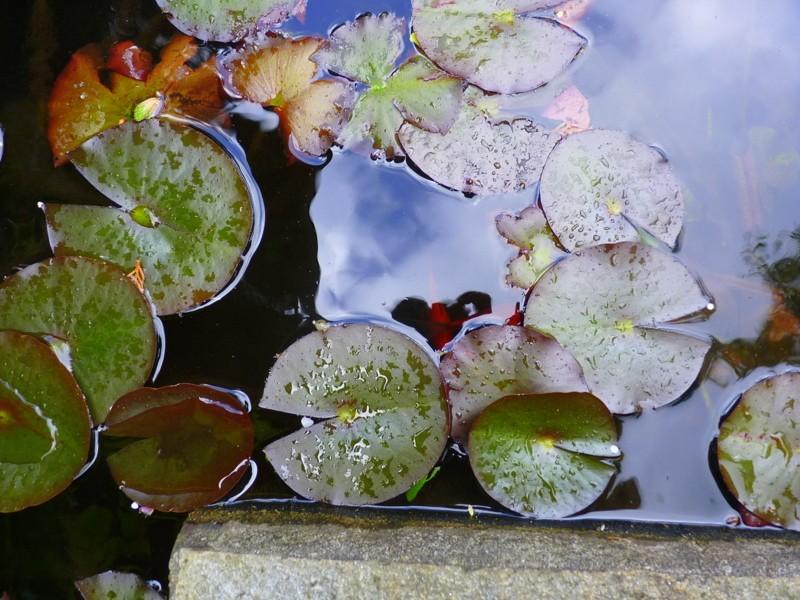 bassin en pierres apparentes 650L style Japonais P1030311