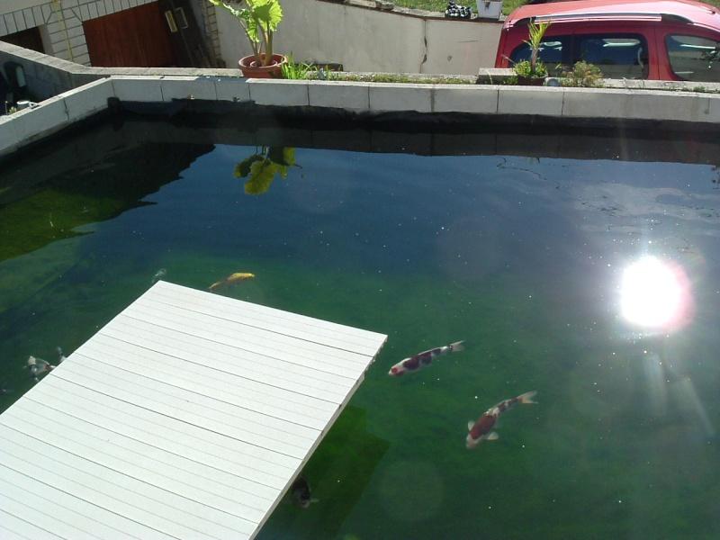 Bassin de Liloo Dscf1210