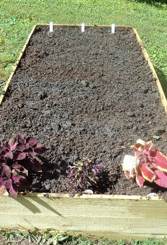 planting Asparagus now? B2e-sf11