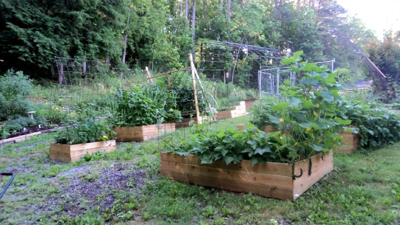 East Tennessee SFG pics - Page 2 Garden10