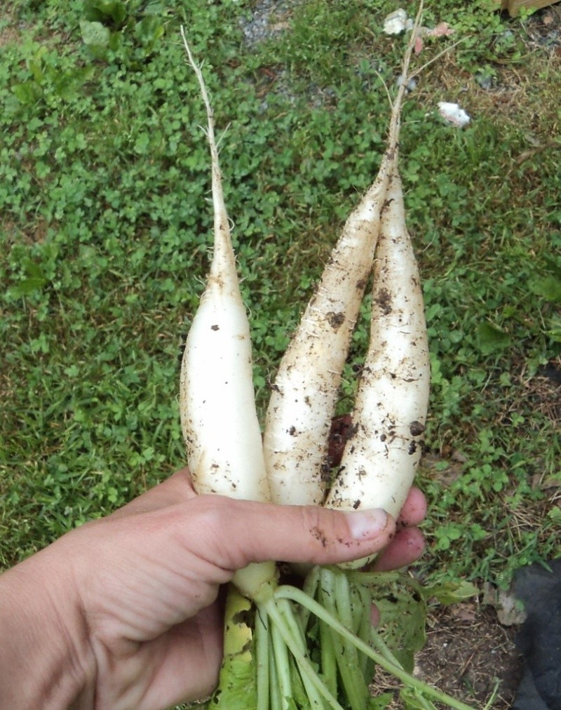 Firsts in East TN -- for me at least Radish10