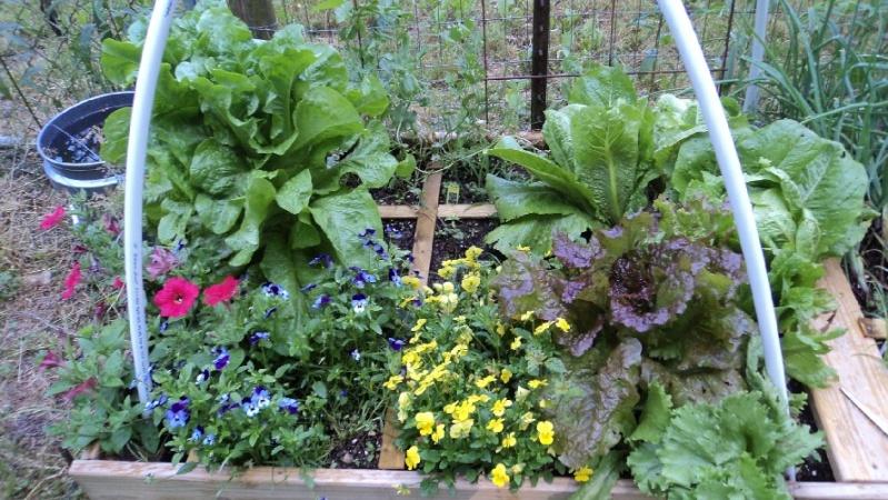 East Tennessee SFG pics Salad-10