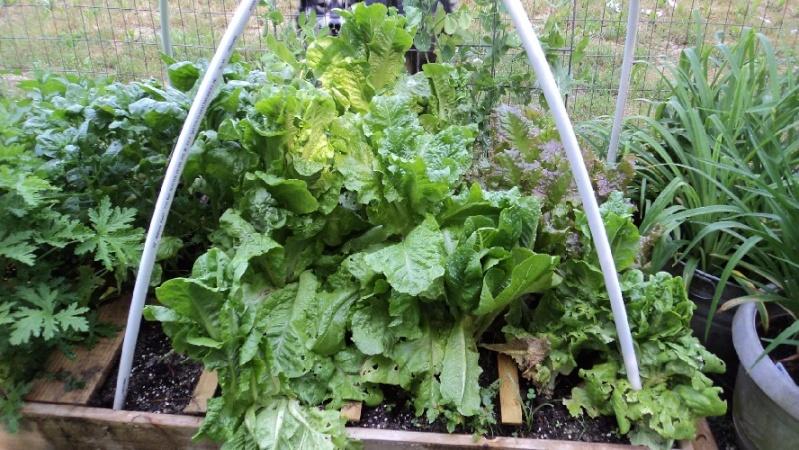 East Tennessee SFG pics Salad-11