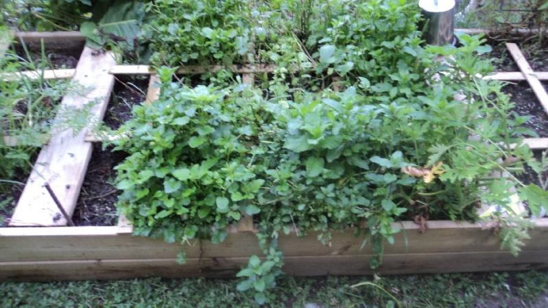 East Tennessee SFG pics Salad-15