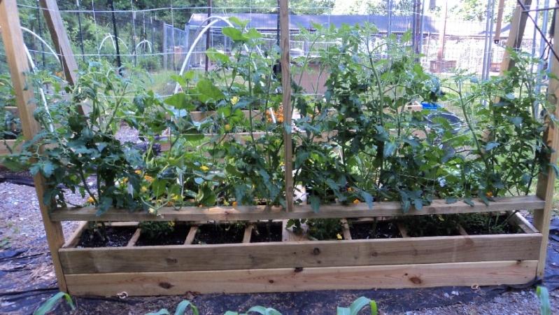 East Tennessee SFG pics Tomato10