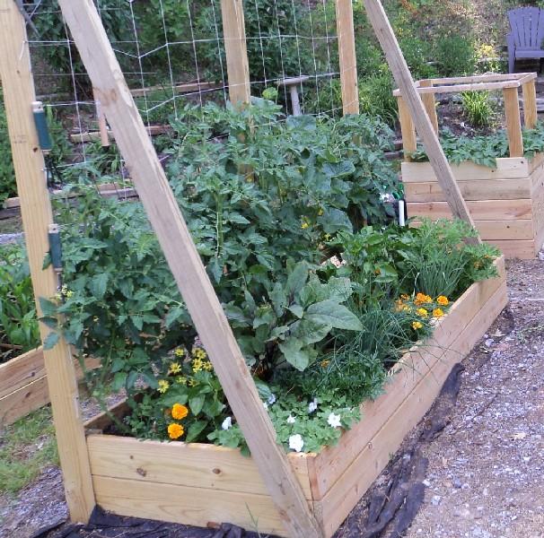 East Tennessee SFG pics Tomato11